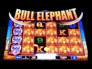 bull-elephant-slot
